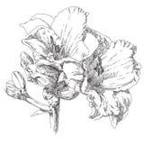 Flor desenhada mão Imagem de Stock