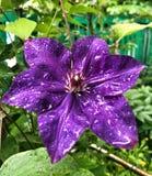 Flor después de la lluvia foto de archivo