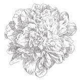 Flor dibujada mano Fotos de archivo