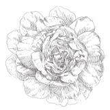 Flor dibujada mano Fotografía de archivo libre de regalías