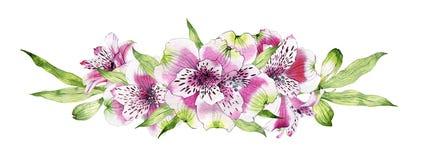 Flor dibujada mano del Alstroemeria de la acuarela Fotografía de archivo libre de regalías