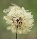 Flor distorcido Foto de Stock Royalty Free