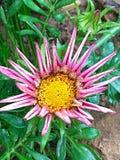 Flor divertida Foto de archivo libre de regalías