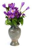 Flor do açafrão Imagem de Stock