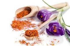 Flor do açafrão com açafrão Imagens de Stock