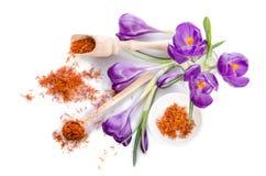 Flor do açafrão com açafrão Fotografia de Stock Royalty Free