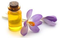 Flor do açafrão de açafrão com extrato Fotos de Stock