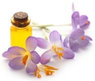 Flor do açafrão de açafrão com extrato Foto de Stock Royalty Free