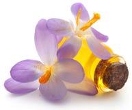Flor do açafrão de açafrão com extrato Fotografia de Stock