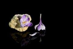 Flor do açafrão no geode de quartzo Fotografia de Stock Royalty Free