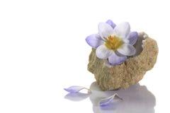 Flor do açafrão no geode de quartzo Fotos de Stock Royalty Free