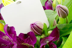 Flor do Alstroemeria imagem de stock royalty free