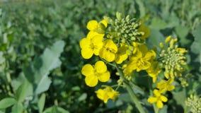 Flor do amarelo da coleção do papel de parede da natureza Fotos de Stock