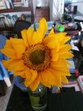 Flor do aniversário Fotos de Stock Royalty Free