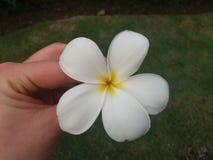 flor do balinese imagem de stock