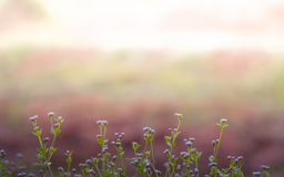 Flor do campo do meio da grama Fotografia de Stock