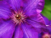 Flor do close up Fotografia de Stock Royalty Free