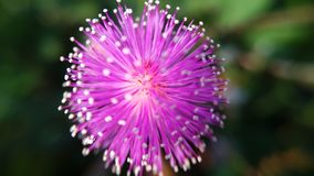 flor do close-up da flor ou fundo azul da flor imagem de stock royalty free