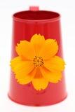 Flor do cosmos em uma lata molhando imagens de stock