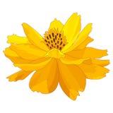 Flor do cravo-de-defunto dos desenhos animados Foto de Stock