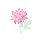 Flor do crisântemo do outono Margarida floral Fotografia de Stock