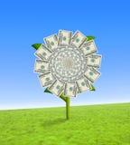 Flor do dólar Fotos de Stock Royalty Free