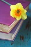 Flor do Daffodil da mola em livros cor-de-rosa foto de stock