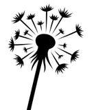 A flor do dente-de-leão Imagens de Stock