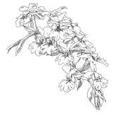 Flor do desenho da mão ilustração stock