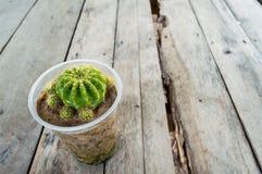 Flor do deserto Fotografia de Stock