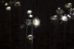 Flor do diodo emissor de luz Fotos de Stock