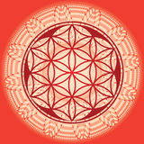 Flor do edição-uso da mandala-mola da semente da vida para o projeto e mim Fotografia de Stock Royalty Free
