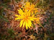 flor do fleur imagem de stock royalty free