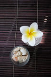 Flor do frangipani e decoração tropicais da pedra. Fotografia de Stock