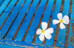 Flor do Frangipani em uma cadeira azul Imagens de Stock
