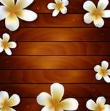 Flor do Frangipani no fundo de madeira Fotografia de Stock Royalty Free