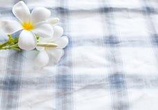 Flor do Frangipani no fundo e no espaço da roupa Imagem de Stock