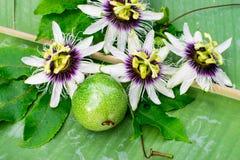 Flor do fruto de paixão fotos de stock royalty free