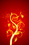 Flor do incêndio Fotografia de Stock Royalty Free