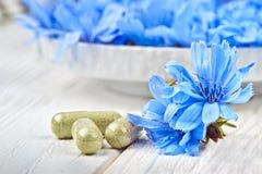Flor do intybus do Cichorium da chicória Fotografia de Stock Royalty Free