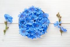 Flor do intybus do Cichorium da chicória Foto de Stock