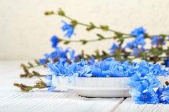 Flor do intybus do Cichorium da chicória Imagem de Stock Royalty Free