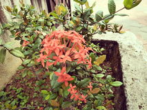 Flor do jardim Imagem de Stock Royalty Free