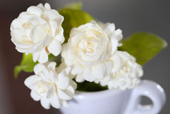 Flor do jasmim (para o dia da mãe de Tailândia) Imagens de Stock