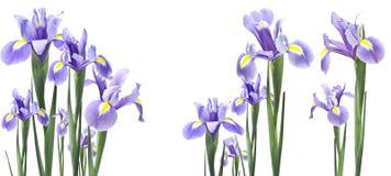 Flor do lírio isolada no branco fotos de stock