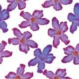 Flor do lilás de Rosa de deserto Teste padrão sem emenda Esboço no vagabundos brancos Imagens de Stock Royalty Free
