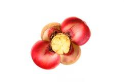 Flor do mangustão no fundo branco Fotografia de Stock