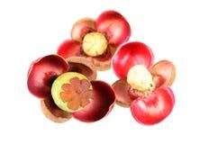 Flor do mangustão no fundo branco Fotos de Stock