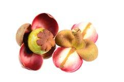 Flor do mangustão no fundo branco Imagem de Stock Royalty Free