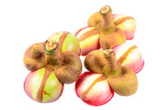 Flor do mangustão no fundo branco Foto de Stock